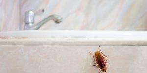 Venenos caseros para cucarachas